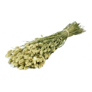 Phalaris séché naturel (200gr)
